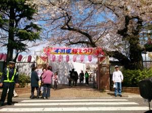 第14回千川堤桜まつりを開催しました