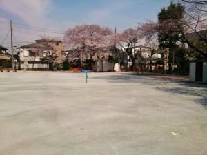 第15回 ふるさと千川桜まつり 【 3月28日(土)現在 桜の開花状況 】