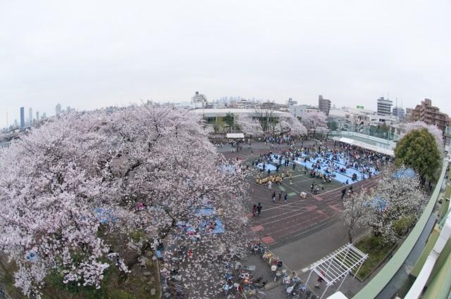 旧千川小学校の桜たち(2010年4月)   photo by t.nakayama